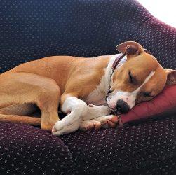 canapé pour chien